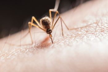 How to sleep with a mosquito in your room?